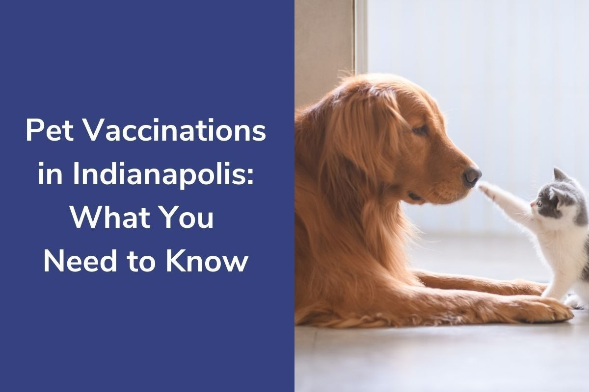 Pet-Vaccinations-in-Indianapolis_-What-You-Need-to-Know