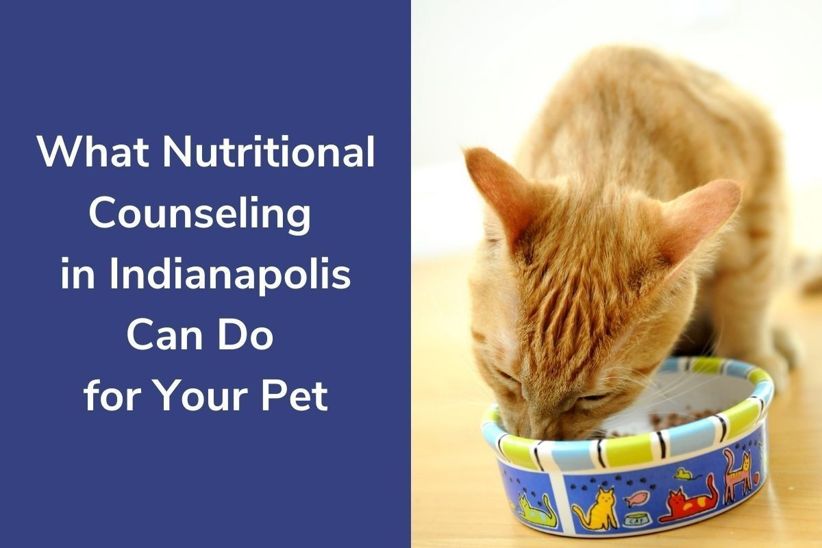 What-Nutritional-Counseling-in-Indianapolis-Can-Do-for-Your-Pet