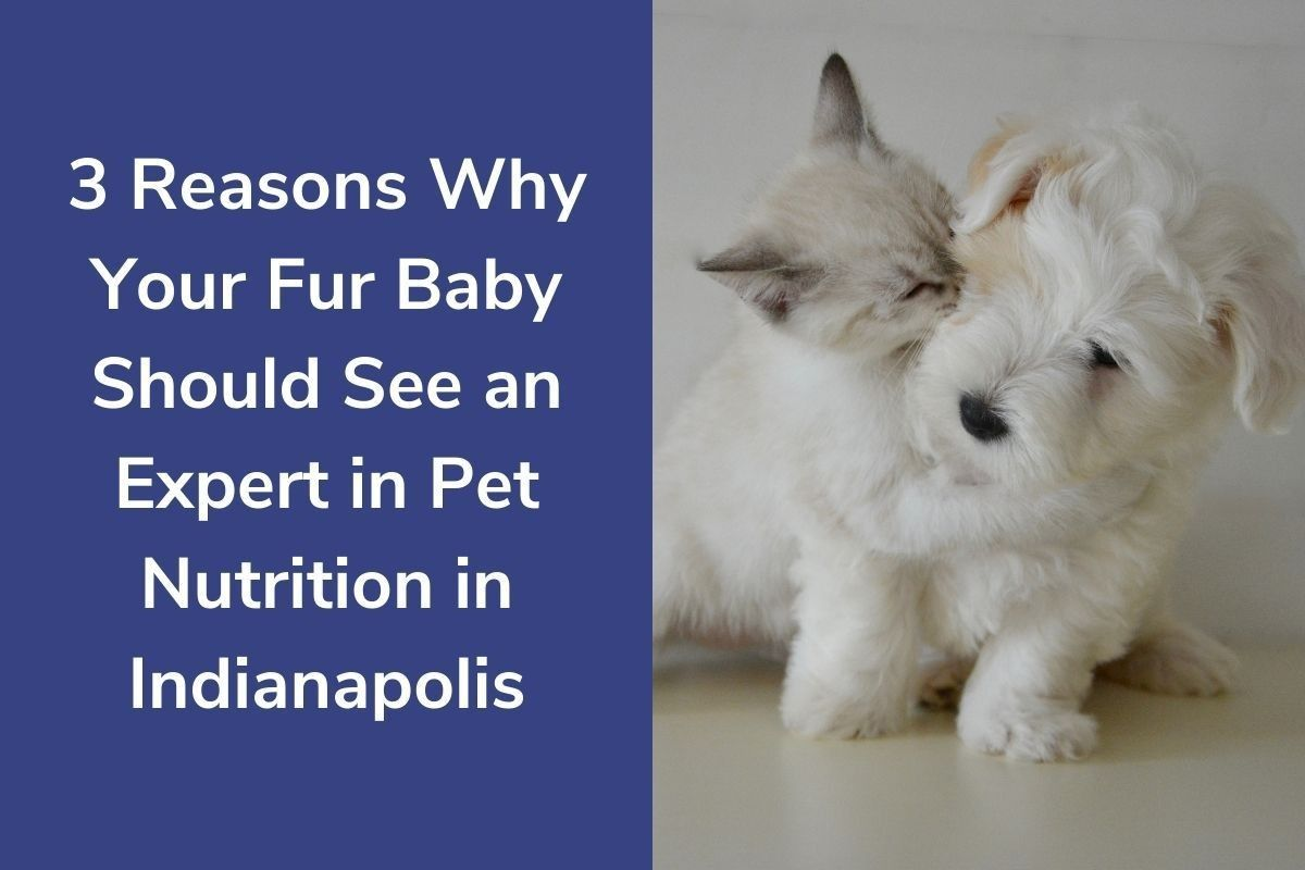 3-Reasons-Why-Your-Fur-Baby-Should-See-an-Expert-in-Pet-Nutrition-in-Indianapolis