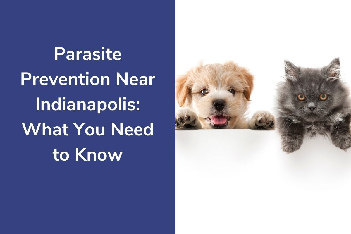 Parasite-Prevention-Near-Indianapolis_-What-You-Need-to-Know