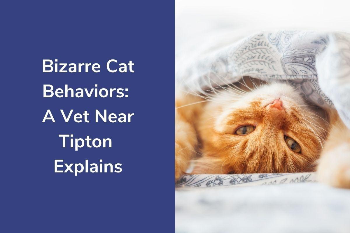 Bizarre-Cat-Behaviors-A-Vet-Near-Tipton-Explains