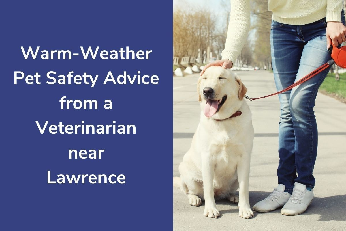 Warm-Weather-Pet-Safety-Advice-from-a-Veterinarian-near-Lawrence
