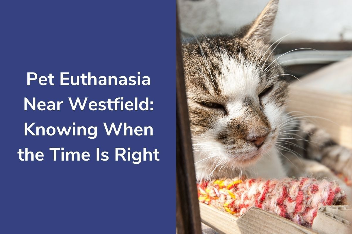 Pet-Euthanasia-Near-Westfield-Knowing-When-the-Time-Is-Right