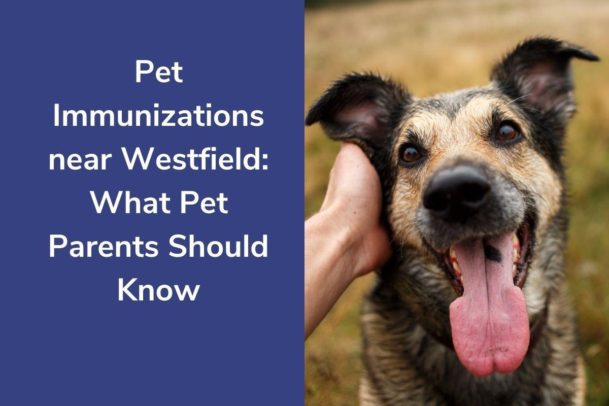 Pet-Immunizations-near-Westfield-What-Pet-Parents-Should-Know