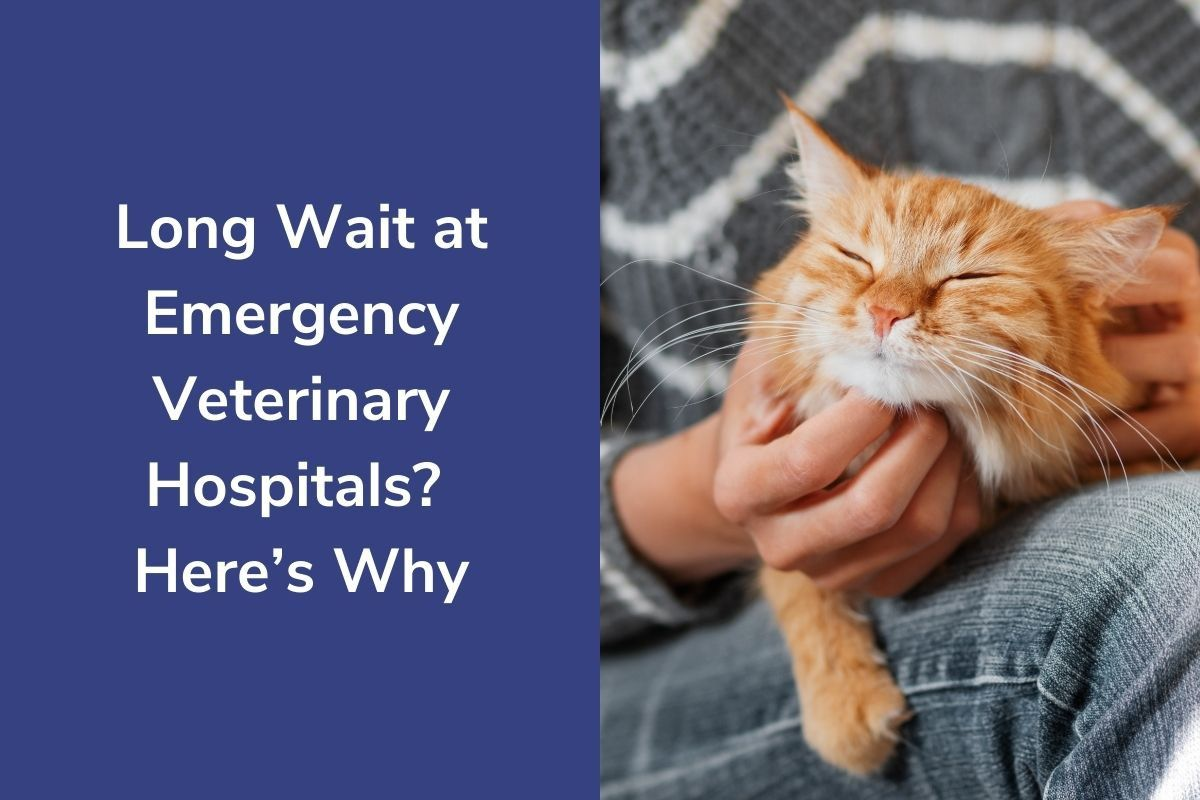 Long-Wait-at-Emergency-Veterinary-Hospitals-Heres-Why