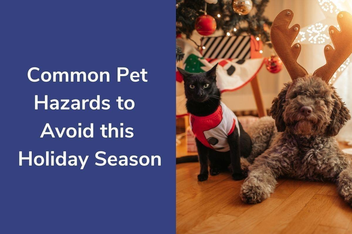 Common-Pet-Hazards-to-Avoid-this-Holiday-Season
