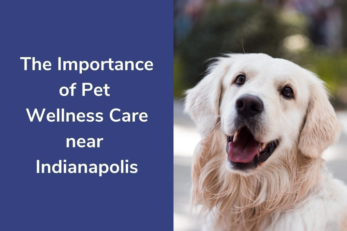 The-Importance-of-Pet-Wellness-Care-near-Indianapolis